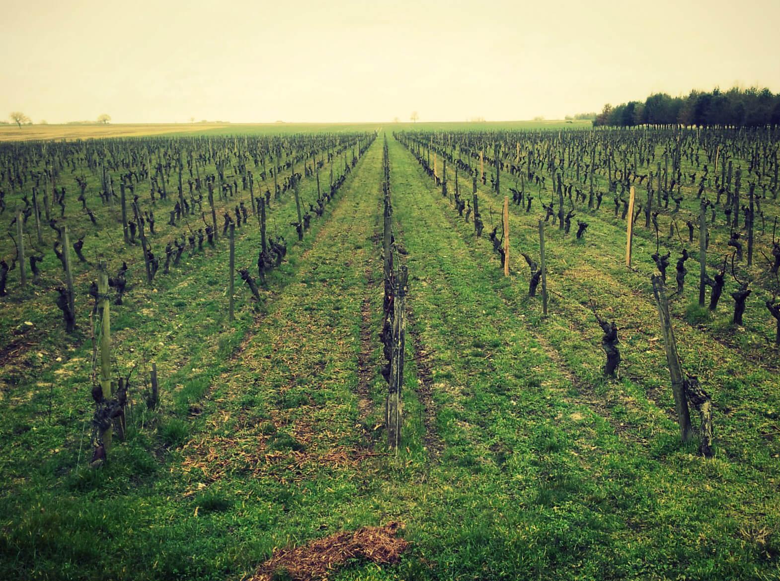 Le travail de la vigne en hiver